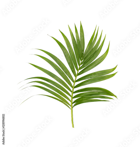 Fotobehang Planten Green leaves of palm tree isolated on white background