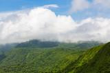 Rainforest landscape in Monteverde Costa Rica