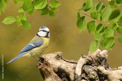 Plakát Vögel 67