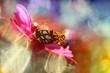 Butterfly from my garden