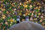 Terreno di foglie in autunno