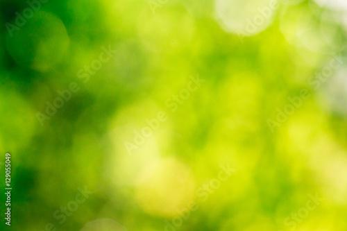 Foto Murales green bokeh background