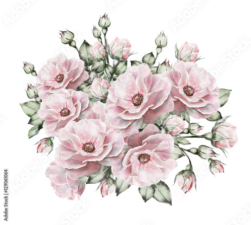 watercolor flowers. floral illustration, flower in Pastel colors, pink rose. branch of flowers isolated on white background. Leaf and buds. Cute composition for wedding or  greeting card - 129061064