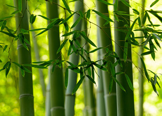 Green bamboo background © silver-john