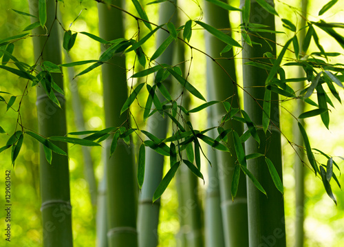 Papiers peints Bambou Green bamboo background