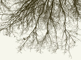 silhouette of the tree branches in winter
