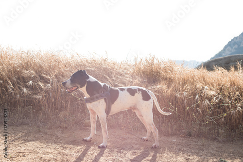 Dog walk Poster