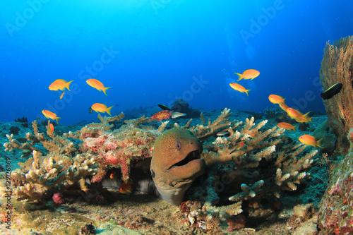 Tuinposter Koraalriffen Giant Moray Eels
