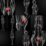 3d rendering illustration of thetibia bone