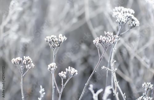 Hoarfrost On The Plants In Winter Field - 129148852