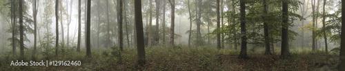 Panorama landscape image of Wendover Woods on foggy Autumn Morni - 129162460