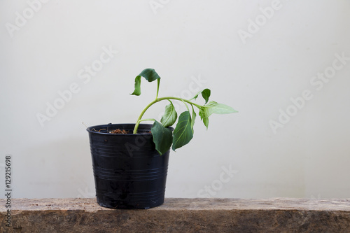 Withered plants in pots Poster