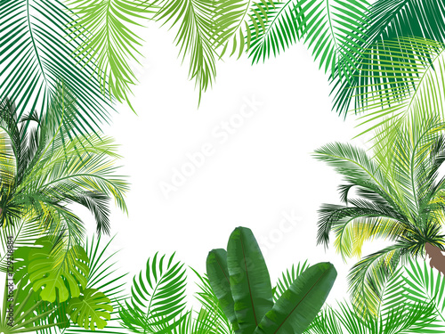 Fototapeta Tropical jungle background with palm tree and leaves.