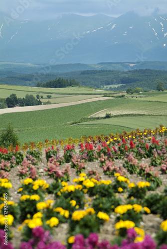 Poster 高原の花畑