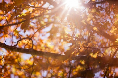 Autumn trees during sunny day Poster