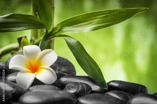 frangipani-i-bambus-na-kamieniach-bazaltowych-zen