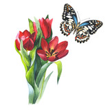 Wildflower flower tulip and butterfly in a watercolor style isolated.