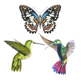 Sky bird colibri anf butterfly in a wildlife by watercolor style isolated.