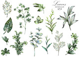 Big Set watercolor elements - herbs, leaf. collection garden and wild herb, leaves, branches, illustration isolated on white background, eucalyptus, exotic, tropical leaf. Green - 129360213