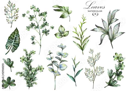Duży zestaw elementów akwarela - zioła, liść. kolekcja ogród i dziki ziele, liście, gałąź, ilustracja odizolowywająca na białym tle, eukaliptus, egzotyczny, tropikalny liść. Zielony