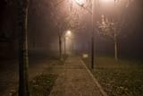 street near the plants at night shrouded in mist illuminated by lamplight