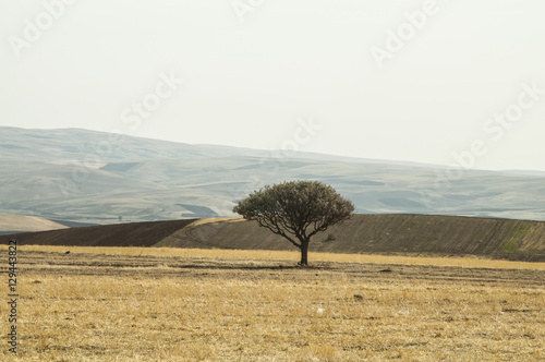 Lonely tree on the yellow valley in autumn - 129443822