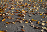 Closeup of yellow brown fallen leaves on a paved path, shallow d - 129445452