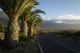 palm road to frontera