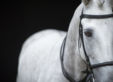 Portrait of grey horse on black background. - 129487601