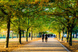 Autumn and people walking on a vibrant tree lined path in Greenwich, London - 129492831