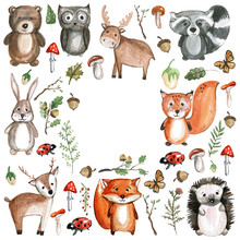 Cute Woodland Animals Watercolor Images Kindergarten Zoo Icons Sticker