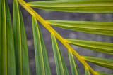 Detalle de hojas de planta