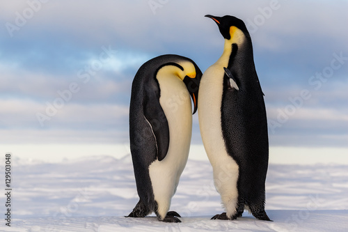 Aluminium Pinguin Emperor penguin crying on friend's breast