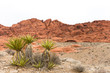 Desert Yucca Plant with Red Rock Ridge and Copy Space