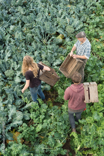 Two Men and a Woman with Crates in a Plantation