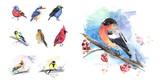 The birds in winter, birds set of watercolor technique. Vector