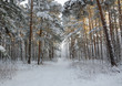 Cold day in winter forest