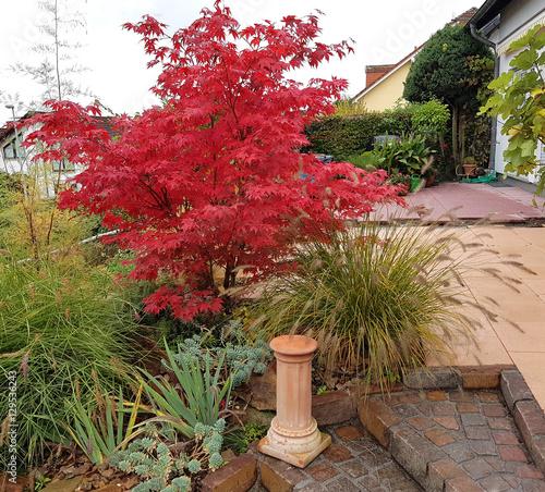 Leinwanddruck Bild Faecherahorn, Herbst, Acer, palmatum, Osakazuki, japonicum;