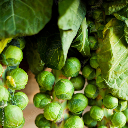 Canvas Brussel Brussels sprouts on the stem in farm shop.