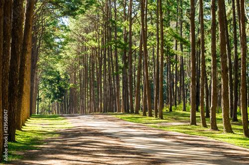 Keuken foto achterwand Bossen pine trunk in the forest and green grass