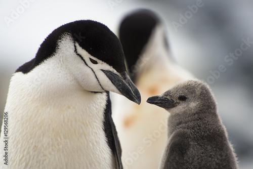 Glimpse of the Penguin
