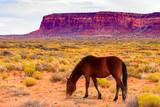 Utah desert horse