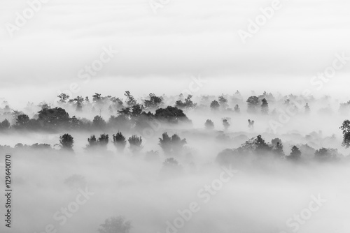 sea of clouds over the forest, Black and white tones in minimalist photography - 129640870