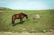 Постер, плакат: Лошадь Карачево Черкессия Россия