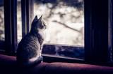 cat looking throught window