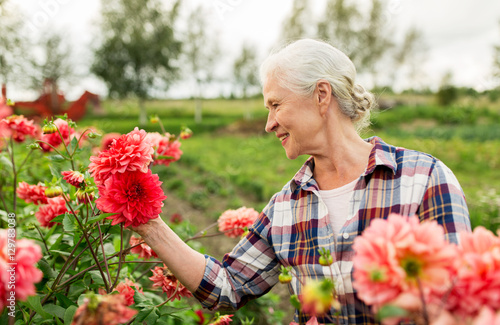 senior woman with flowers at summer garden Plakat