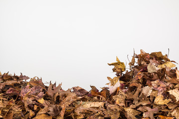 Fall leaves background in horizontal orientation with copy space