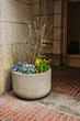 Flowerpot with colorful pansies on the streets of Boston