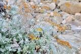 Plante et fleurs sauvages du bord de mer en Bretagne