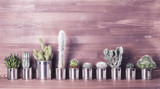 Fototapeta Kitchen - Cactus and succulents on a wooden background. Recycle aluminum can © KashtykiNata